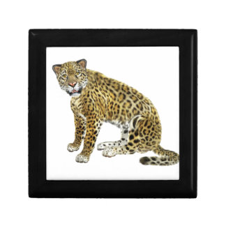 Jaguar Looking with Intent Gift Box