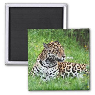 Jaguar Fridge Magnet