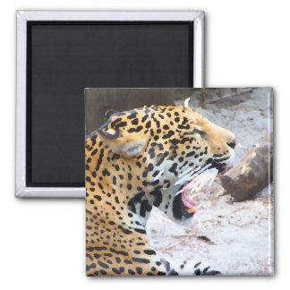Jaguar manchado pintó imagen imán cuadrado