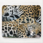 jaguar-mom-and-baby mouse pad