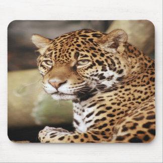 Jaguar Mousepad Alfombrilla De Ratón