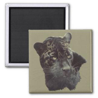 Jaguar negro imán cuadrado