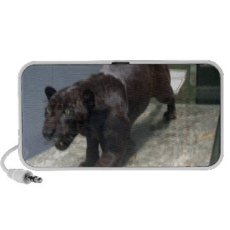 Jaguar negro (onca del Panthera) iPod Altavoz