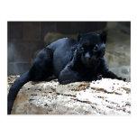 Jaguar negro postal