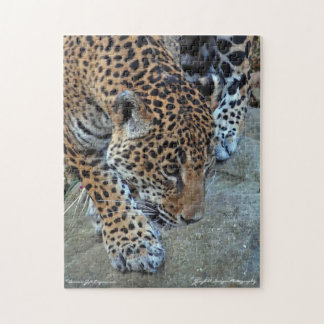 Jaguar On The Prowl Jigsaw Puzzle