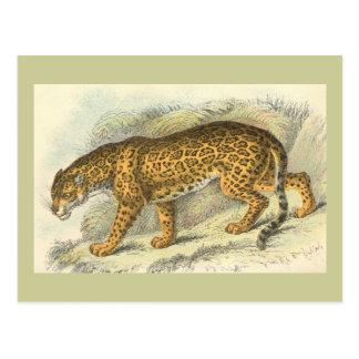 Jaguar, onca del Felis Postal