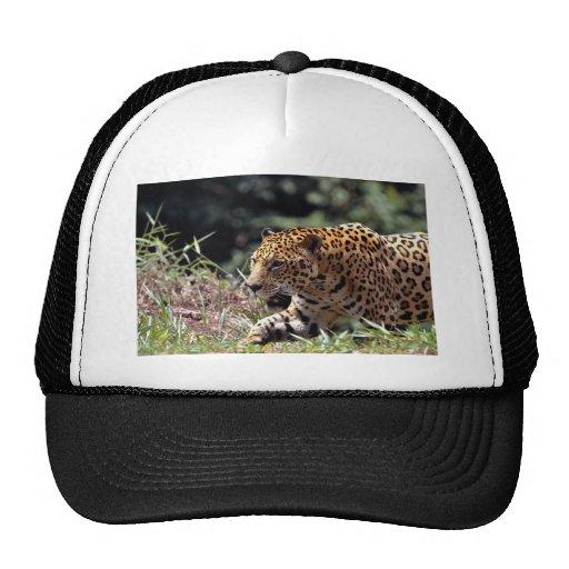 Jaguar (onca del Panthera) Gorro De Camionero