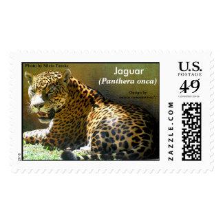Jaguar (Panthera onca) 1 Postage Stamp