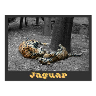JAGUAR-PAW BACK-IMG_2914/fbw/gray Tarjeta Postal