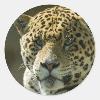 Jaguar Pegatina Redonda