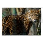 Jaguar Photo Greeting Card
