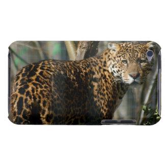 Jaguar Photo iTouch Case iPod Case-Mate Cases