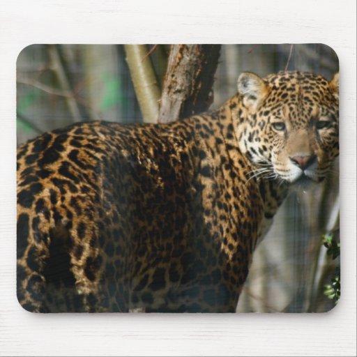 Jaguar Photo Mouse Pad