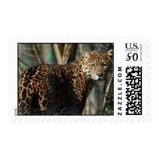 Jaguar Photo Postage Stamp
