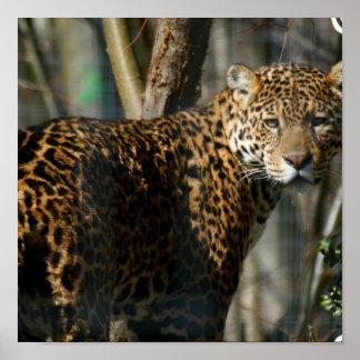 Jaguar Photo Print
