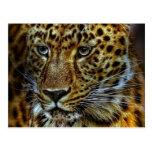 Jaguar Post Card