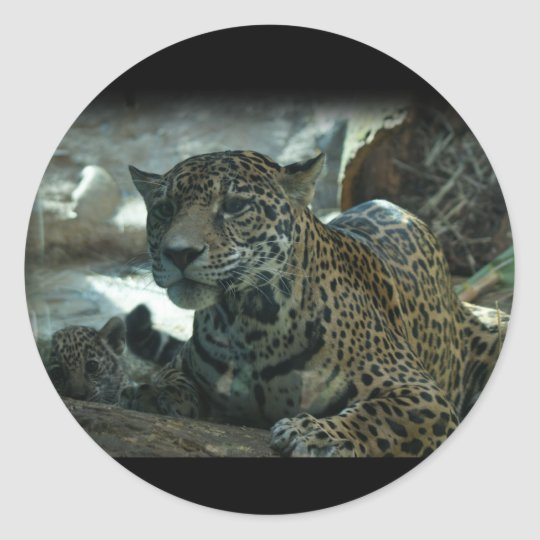 JAGUAR - PROTECTIVE MOTHER AND KITTEN CLASSIC ROUND STICKER