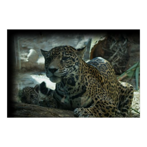 JAGUAR - PROTECTIVE MOTHER AND KITTEN POSTER