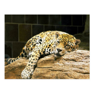 Jaguar que descansa sobre la roca, frontal tarjetas postales