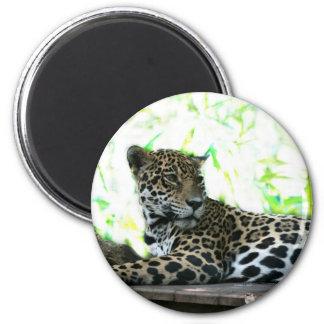 Jaguar que mira sobre verde dappled hombro imán redondo 5 cm