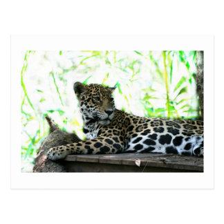 Jaguar que mira sobre verde dappled hombro postales