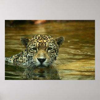 Jaguar que nada la foto impresiones