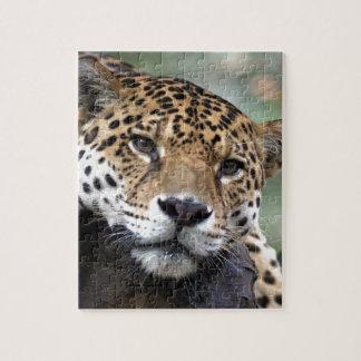 Jaguar resting jigsaw puzzle