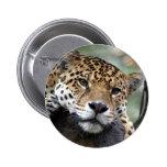 Jaguar resting pinback buttons