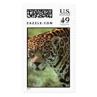 jaguar sello