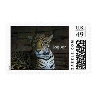 Jaguar Envio