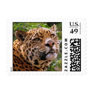 Jaguar Franqueo