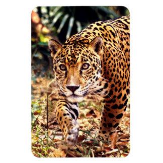 Jaguar - selvas de Belice Imán De Vinilo
