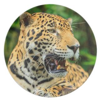 Jaguar shows its teeth, Belize Melamine Plate