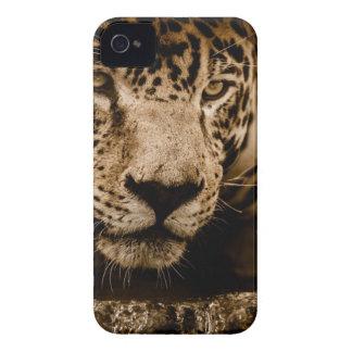 Jaguar Stalking Prey iPhone 4 Case