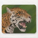 Jaguar Tapete De Raton
