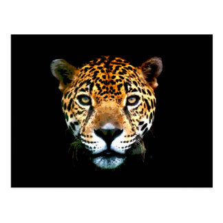 Jaguar Postal