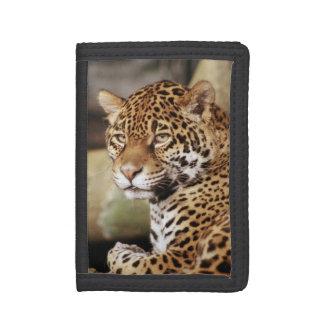 Jaguar Wallet