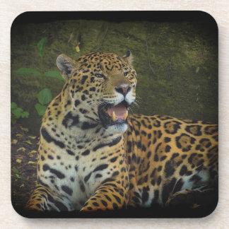 Jaguar Wild Cat Animal-Lover Cork Coaster