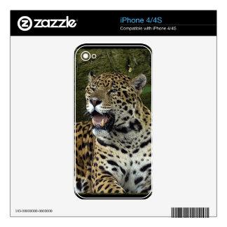 Jaguar Wild Cat Animal-Lover Electronics Skins iPhone 4S Skins