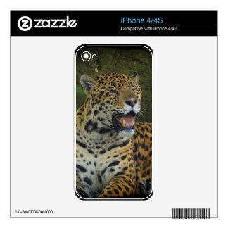 Jaguar Wild Cat Animal-Lover Electronics Skins Skins For The iPhone 4