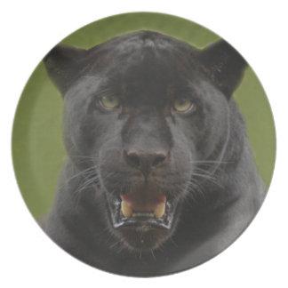 jaguarblack10x10 plato de comida