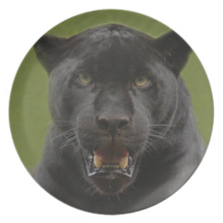 jaguarblack10x10 plato de cena