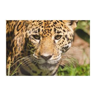 Jaguarclose-up of face canvas print
