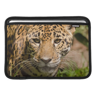 Jaguarclose-up of face MacBook air sleeve