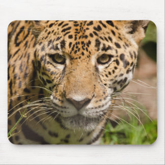 Jaguarclose-up of face mouse pad