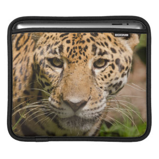 Jaguarclose-up of face sleeve for iPads
