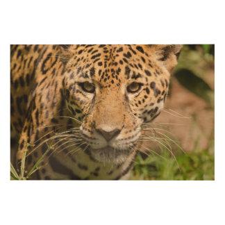 Jaguarclose-up of face wood print