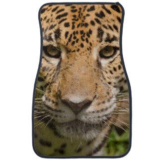 Jaguarclose-up of face car mat