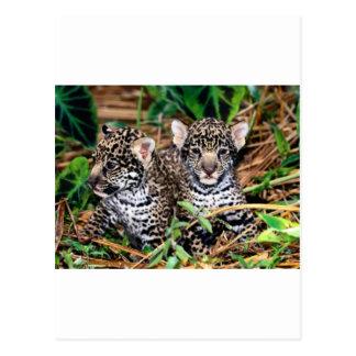 Jaguares del bebé tarjeta postal