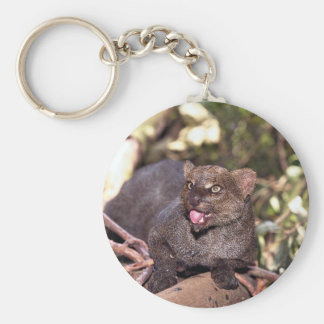 Jaguarundi (Felis yagouaroundi) Key Chains